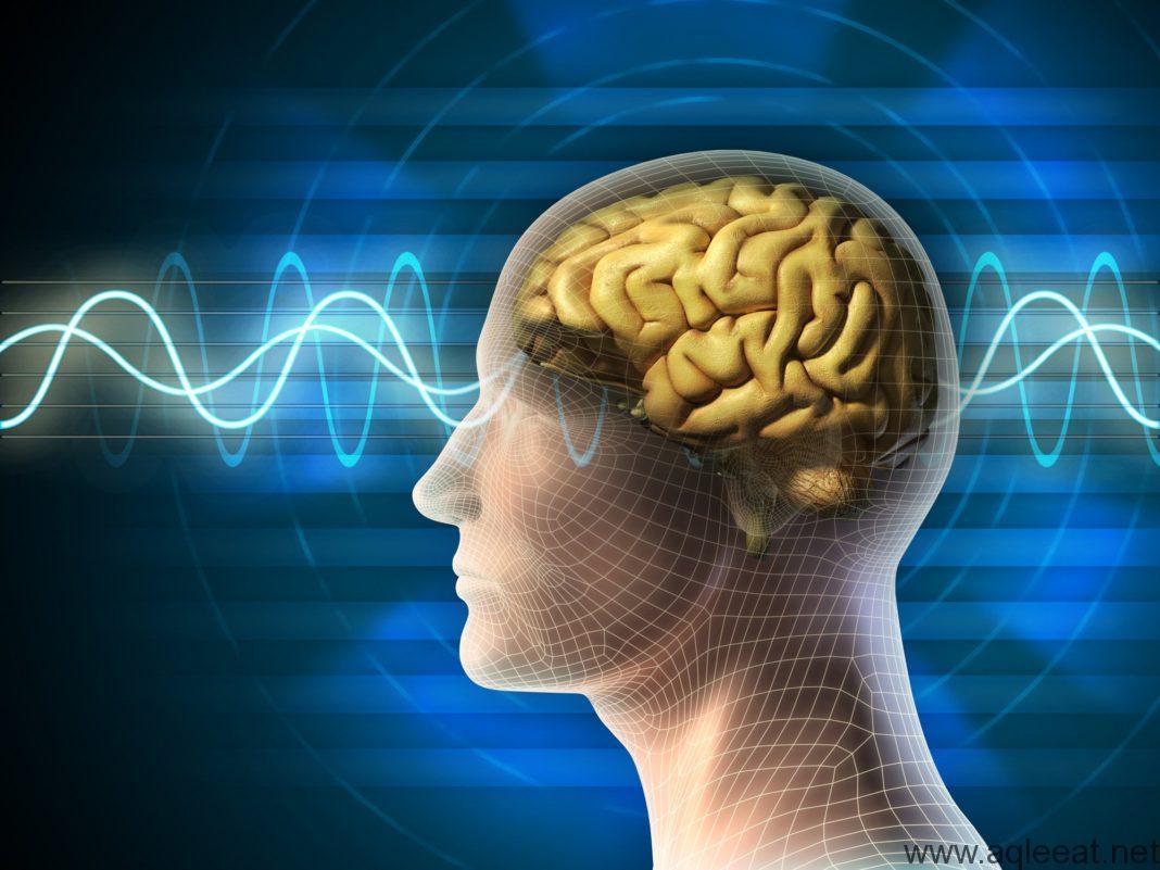الصيام و دوره في تنشيط الدماغ - دراسة