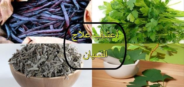 أعشاب تساعد في علاج النسيان